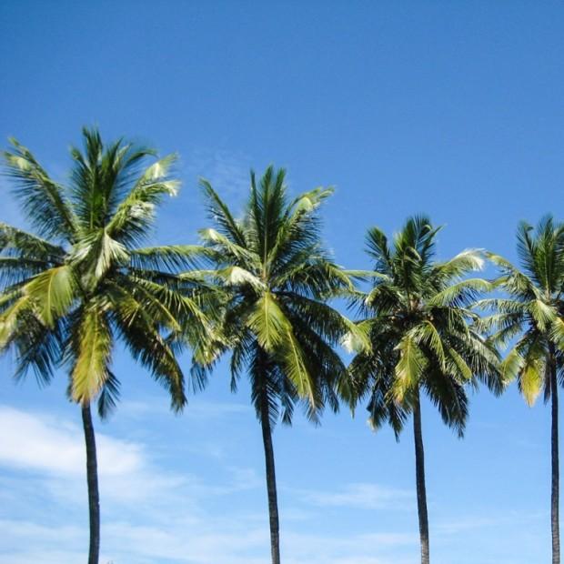 Goa-Indien-Patnem-Palolem-3498-1132x849